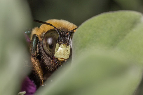 Above: Bee peeping (Image by Gordon, used under CC BY 2.0 licence)